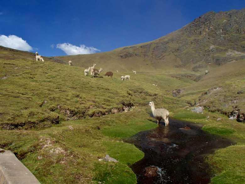 Machu Picchu Tours - Trek Lares valle