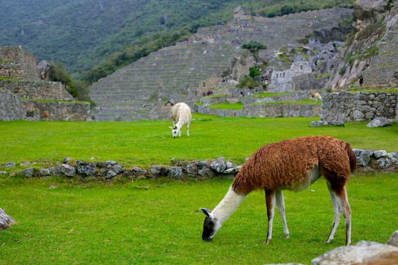 Excursiones en Machu Picchu