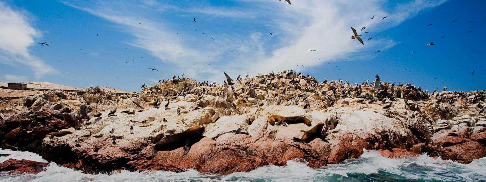Tour 2 Dias en Ica - Paracas - Nazca